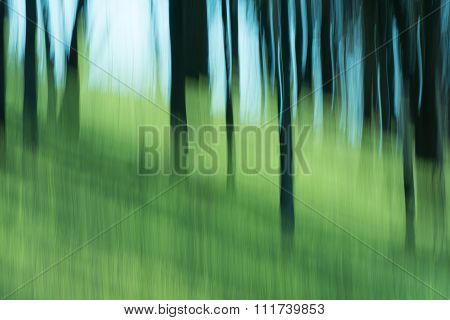 Abstract Of Trees And Sky With Blur