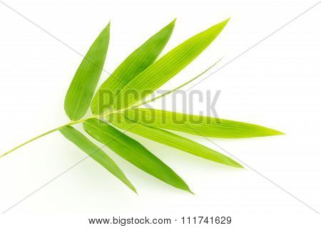 Fresh Bamboo Leaves Border Isolated On White Background, Botanical Zen Forest, Tropical Spa Decorati
