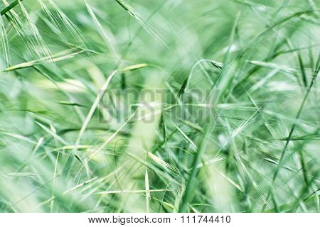 Field Of Grain, Agricultural Theme
