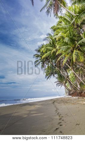 Footprints On A Tropical Palm Fringed Beach