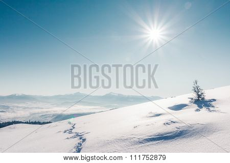 Majestic winter trees glowing by sunlight. Dramatic wintry scene. Place location Carpathian national park, Ukraine, Europe. Alps ski resort. Beauty world. Instagram toning effect. Happy New Year!