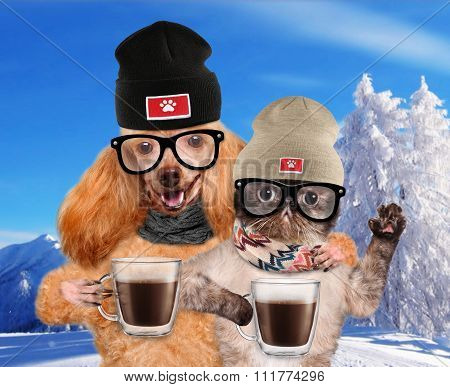 Dog with a cat, holding in the paws of a cup of cocoa.
