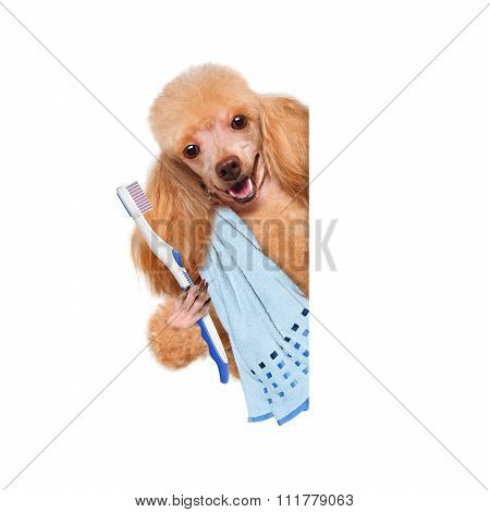 Brushing teeth dog .
