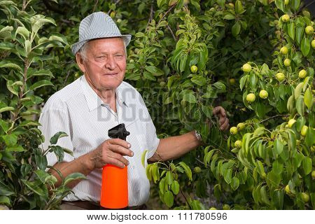 Gardener applying an insecticide/a fertilizer to his fruit shrubs, using a sprayer. Selective focus
