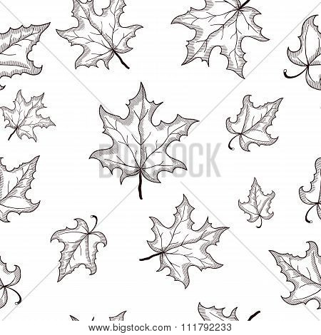 Vector seamless pattern with hand drawn black doodle maple leaves illustrations. decorative oak back