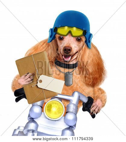 Motorbike dog with a posting.