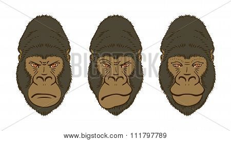 Gorilla's Mimic, Three Portraits Isolated On White. Vector Illustration.