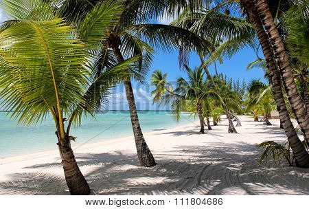 Beach with Palms at the Bahamas
