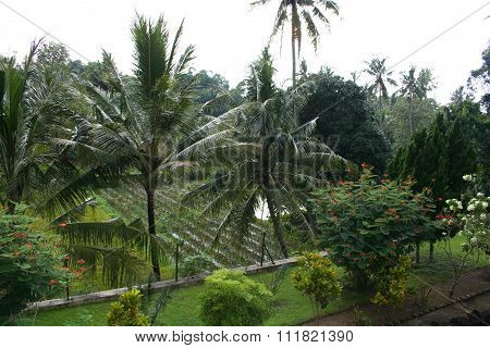 Tropical forest segment
