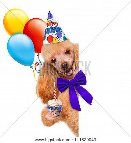 Birthday dog .