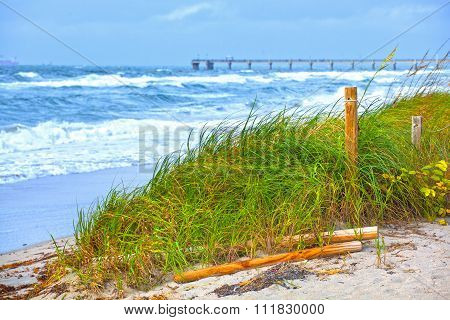 Florida Beach grass dunes and waves during storm winds