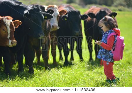 Young girl feeding grass to cows in a field