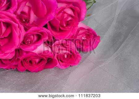 Bright Pink Roses on Gray Tulle Background