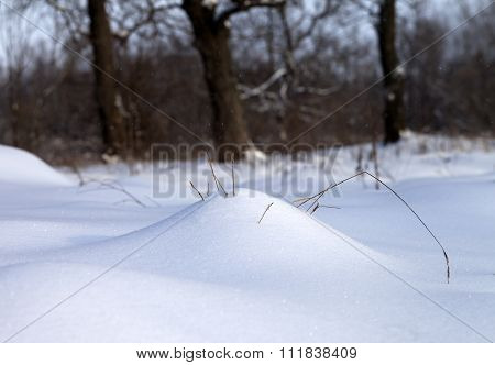 Snow Drift And Dry Grass In Winter Forest