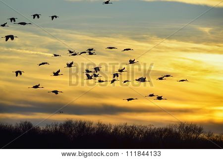 Birds In Flight.