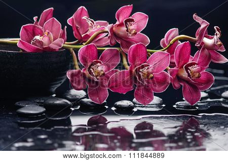 branch red orchid with therapy stones-wet background