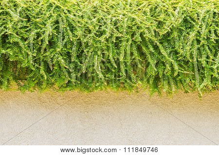 Slab And Grass Of Nature On Background