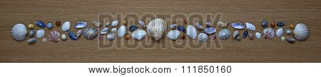 Sea shells Seashells! Panorama / Background.