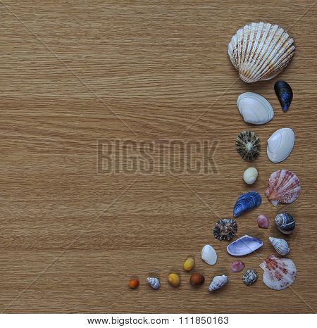Seashell Abstract On Wooden Background With Text Space, Square.