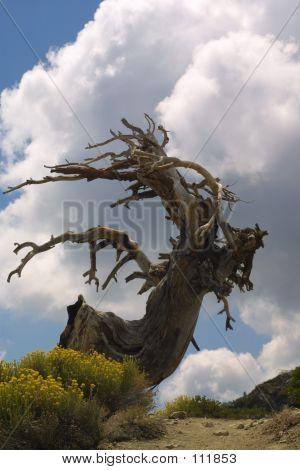Menacing Tree