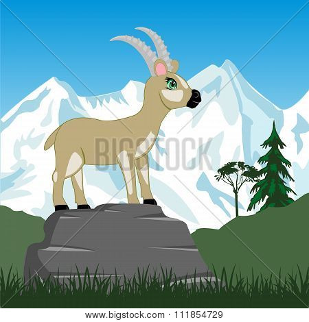 Wild sawhorse in mountain