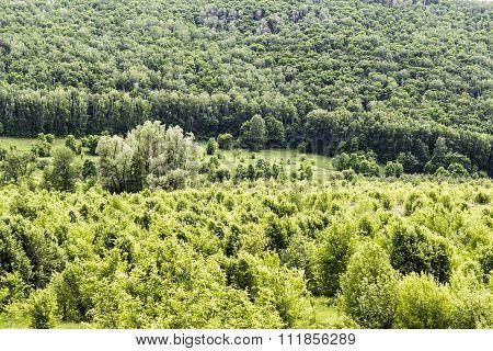 Wild, Untouched Forests