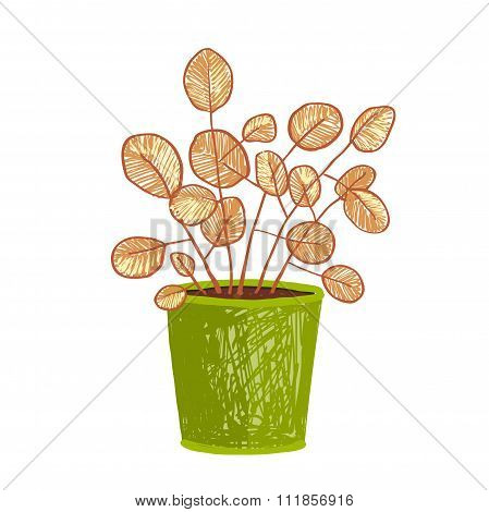 Indoor leafy plant in pot hand drawn illustration