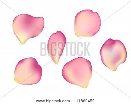 Elegant Set Of Beautiful Rose Petals.