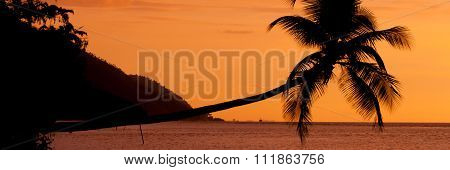 Orange sunset Silhouette of a horizontal palm tree hanging over the sea at beach in Raja Ampat