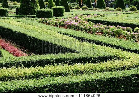 Topiary in an English Formal Garden
