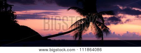 Colorful sunset Silhouette of a horizontal palm tree hanging over the sea at beach in Raja Ampat