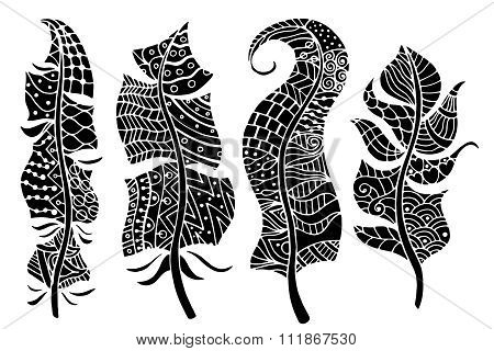 Feathers Vector Collection