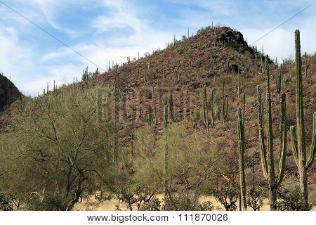 Desert landscape Mexico