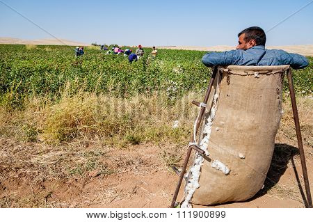 Cotton Picking Manager Turkey