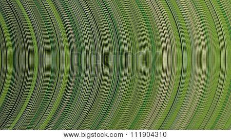 Curve Ribbon Pattern Green