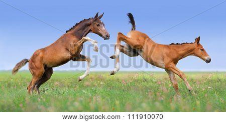 Couple colts