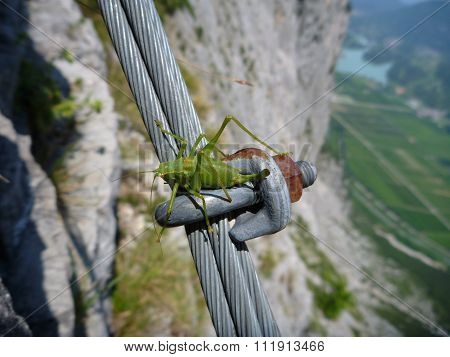 Grass Hopper At The Steel Fixed Rope For Via Ferrata
