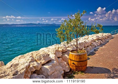 Olive Tree In Barrel By The Sea