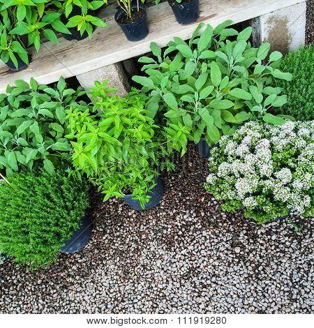 Green Plants On Gravel Background