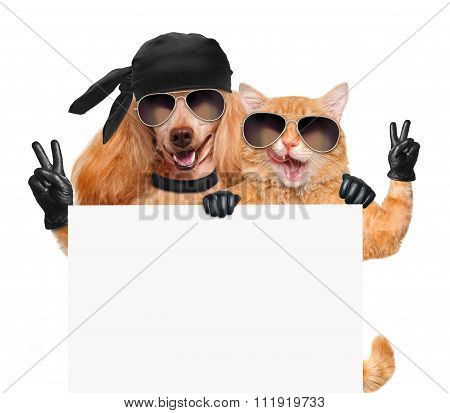 Dog and cat with peace fingers in black leather gloves