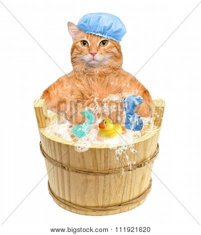 Cat washes