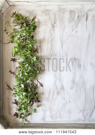 Microgreens on White Wood Tray