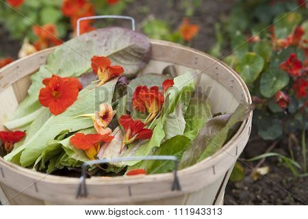 Edible Flower Salad Ingredients