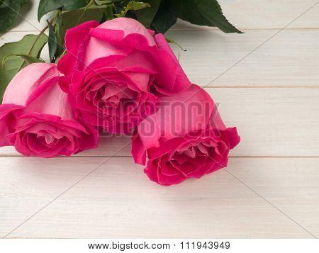 Three Hybrid Tea Roses On The Planks Background