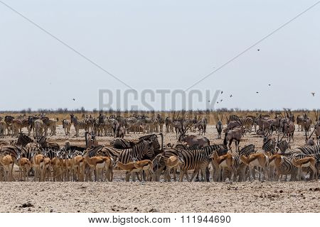 Crowded Waterhole With Wild Animals