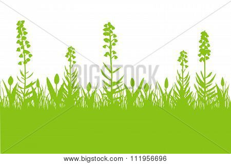 Fritillaria Persica And Tulips Spring Background