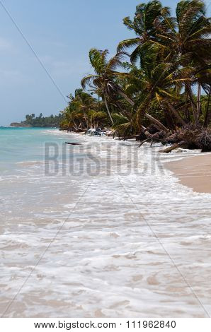 Palm Trees in the wind on white sand beach coast under blue sky tropical caribbean Corn Island