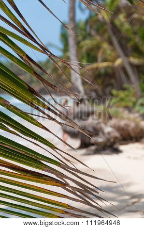 Lonely caribbean white sand beach and coconut palm trees behind leaves on little corn island