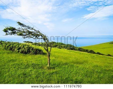 Single tree in windy day
