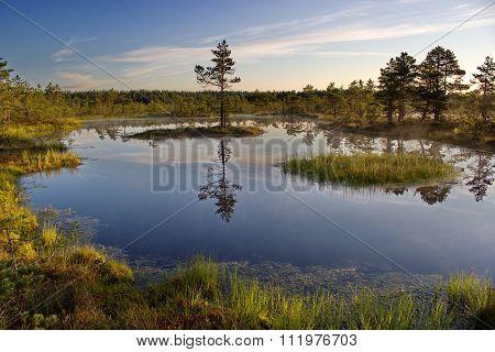 morning at Viru bog, Lahemaa national park, Estonia